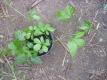 Heilkräuter und Gemüsepflanzen