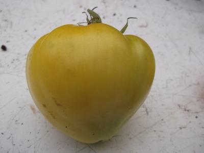 Tomate Coeur de Boeuf jaune Samen