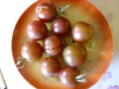 Tomate Black Cherry Samen