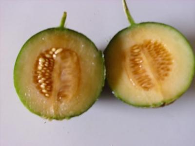 Kasachische Obstmelone Samen