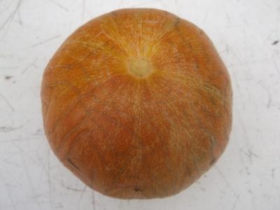 Apfelmelone aus Rumänien Samen