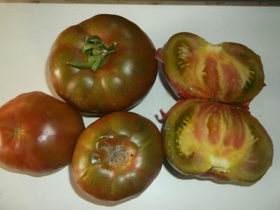 Tomate Black from Tula Samen