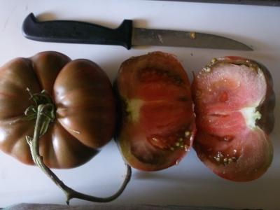 Tomate Lila Sari Pflanze