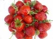 Elefantenerdbeere,Tomatenerdbeere ERDBEERE MADAME MOUTOT 10 Pflanzen
