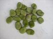 Japanische Puffbohne Sortenname unbekannt Samen