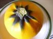 Hokkaido gelb Samen