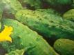 Einlegegurke Colet  F1 Hybriden Samen