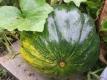 Moschuskürbis Muscade de Provence Samen