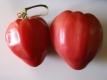 Tomate Kroatisches Ochsenherz Pflanze