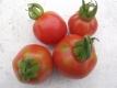 Tomate Zhuan Hong Kiao Samen