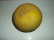 Galiamelone Cucumis melo var. reticulatus Samen