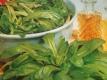 Feldsalat Holländischer breitblättriger Samen