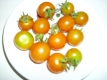 Wildtomate Urtomate Pflanze