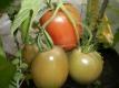 Tomate Purple Russian Samen
