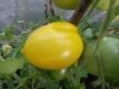 Tomate Slivi Limonje Samen