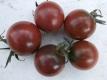 Tomate Black Zebra Cherry Pflanze
