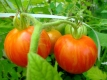 Tomate Tigerella Samen