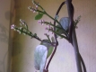 Ceylon-Spinat Basella alba var. Rubra Pflanze